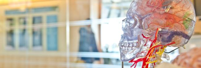 Padaczka – implanty mózgowe jako nowoczesne wsparcie dla osób niepełnosprawnych