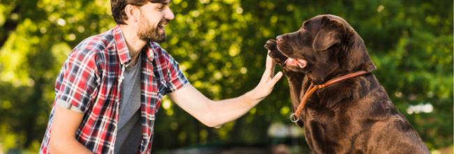 Pies asystent – pomocnik i przyjaciel